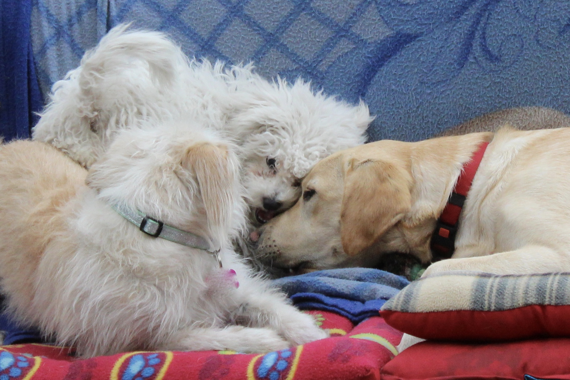 lenteja, Puppy, Olivia