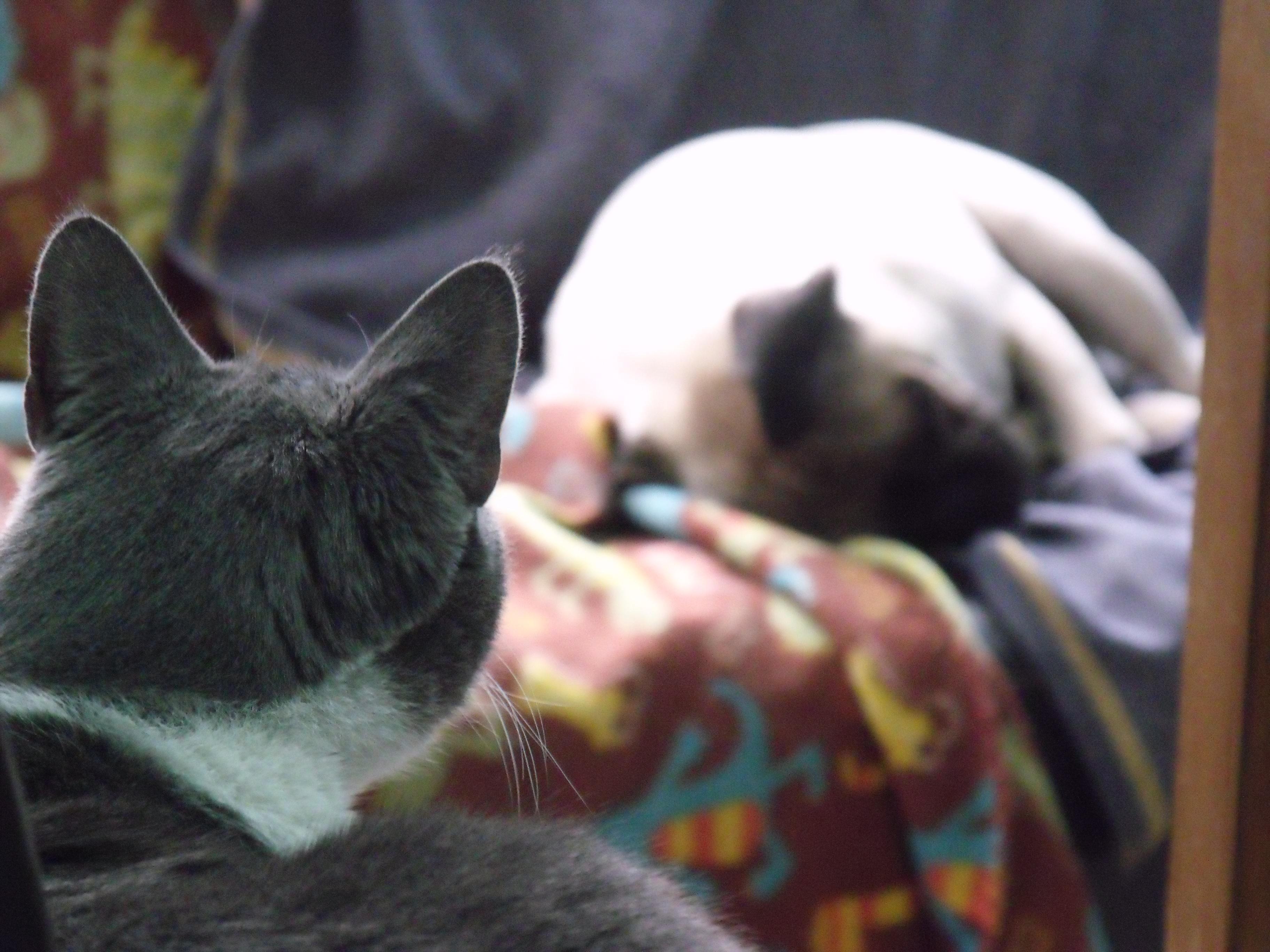 Gato Punto y Agustín