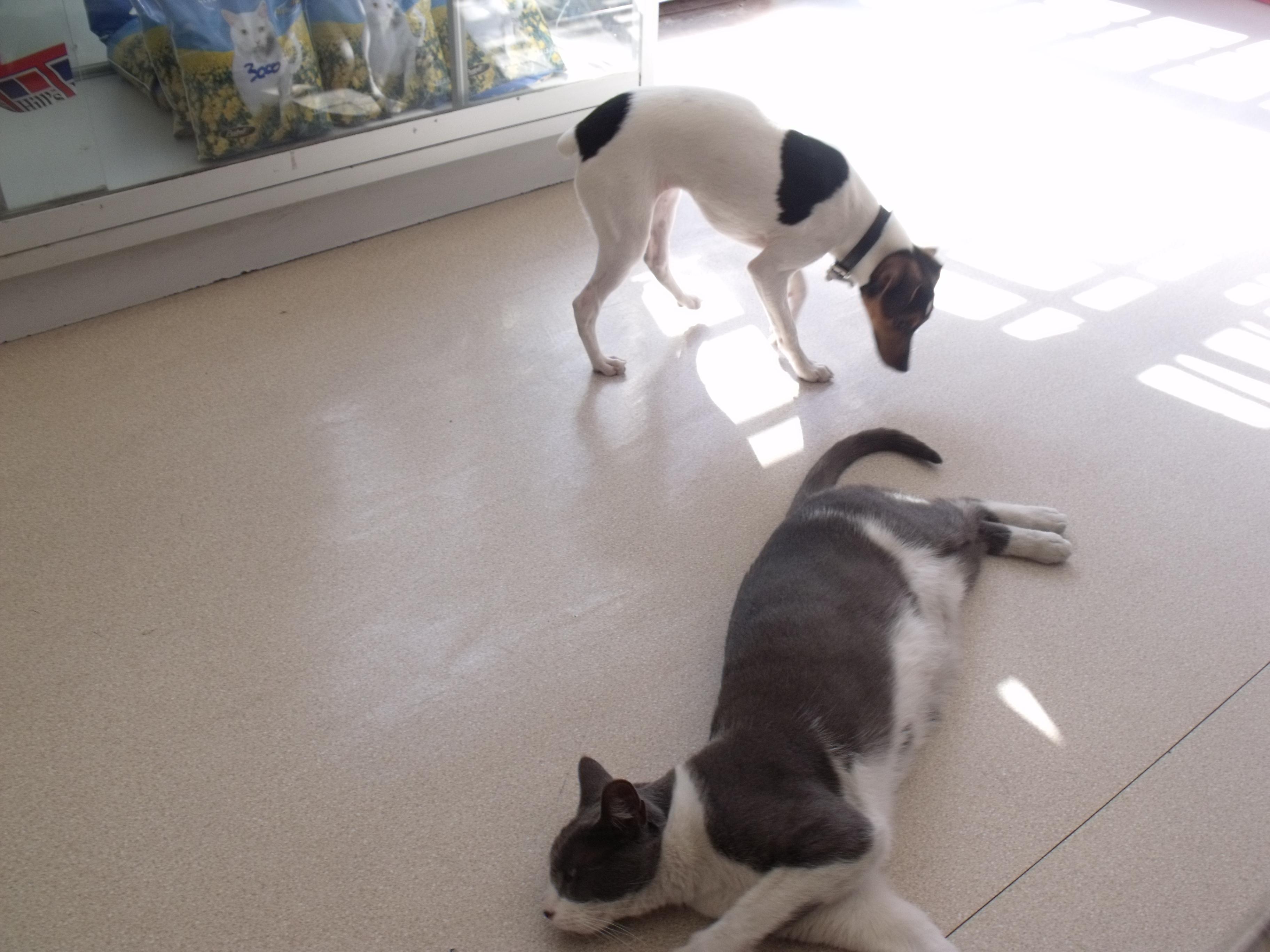 Almendra y gato Punto