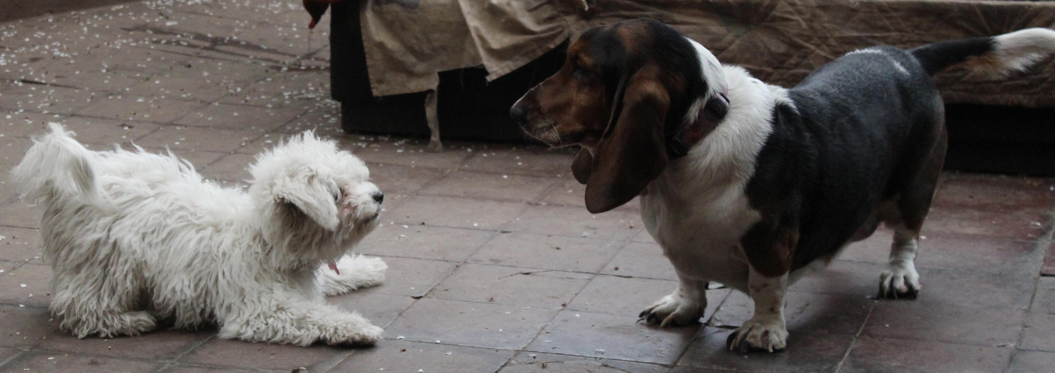 Puppy y Pascuala