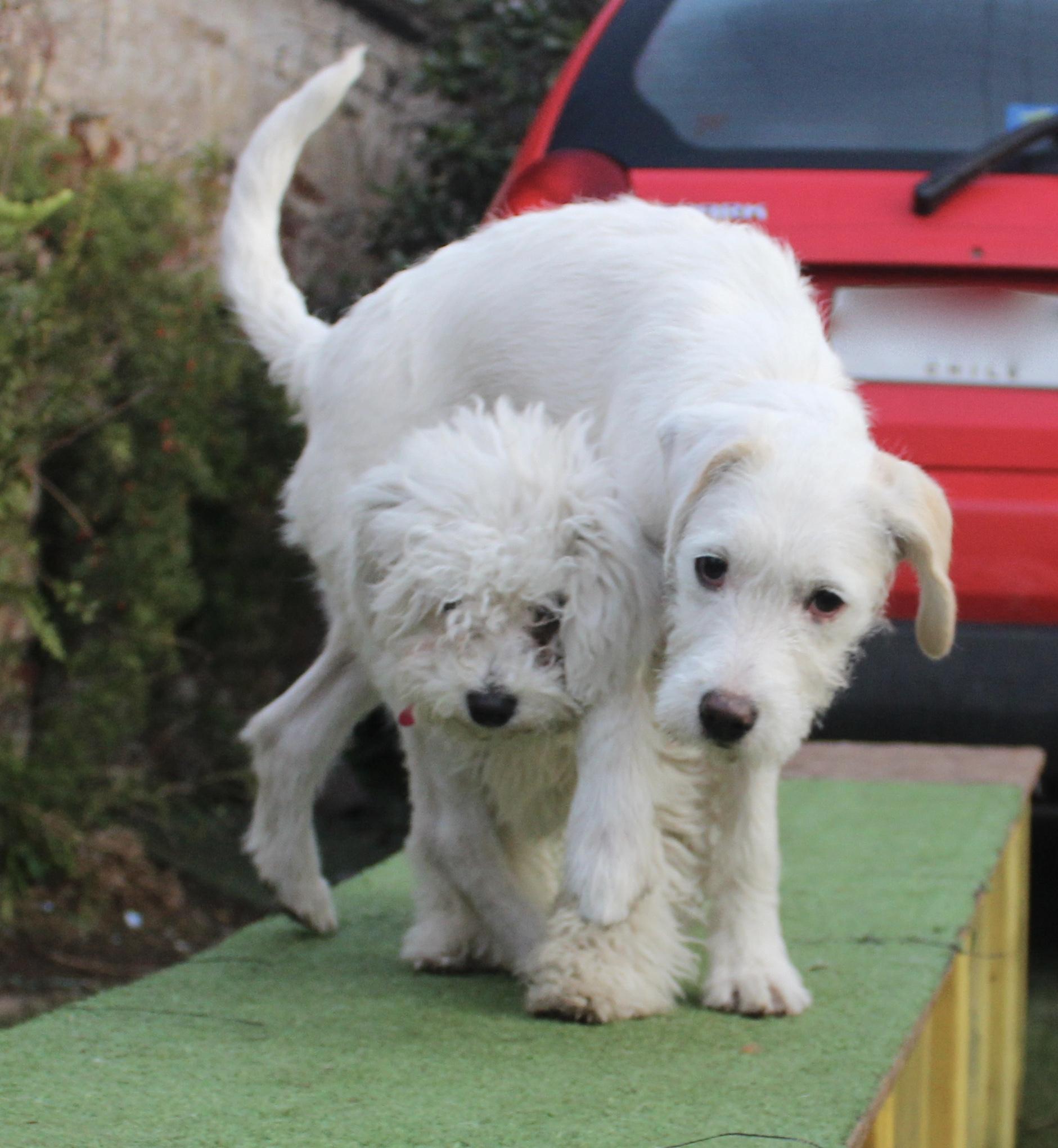 Puppy y Noa