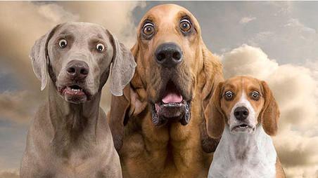 Estudios demuestran que las mascotas no transmiten el COVID-19