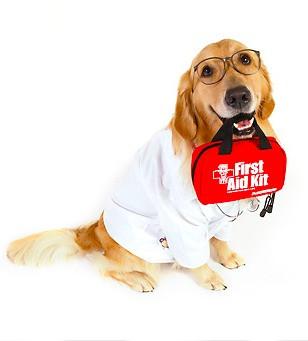 ¡SIGNOS DE ALARMA! cuándo acudir al veterinario