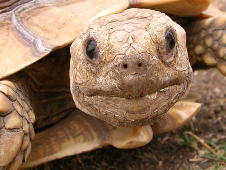 Tortugas e iguanas