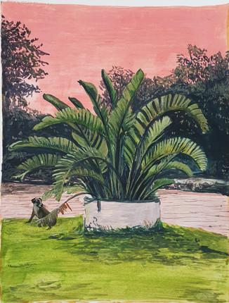 """Dog and Palm"""