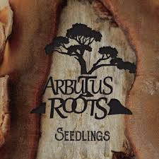 Arbutus Roots - Seedlings
