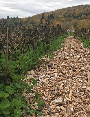 Cover Crops and Mulch