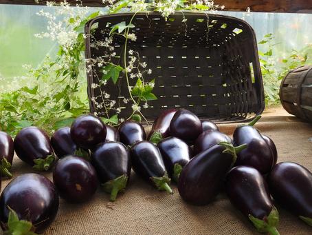 Vietnamese Eggplant