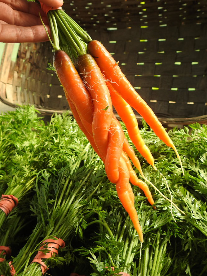 Carrot Connection