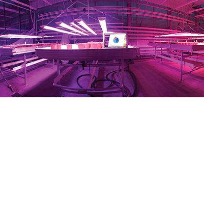 is LED grow light better than HPS?
