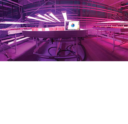 is LED grow light better than HPS?