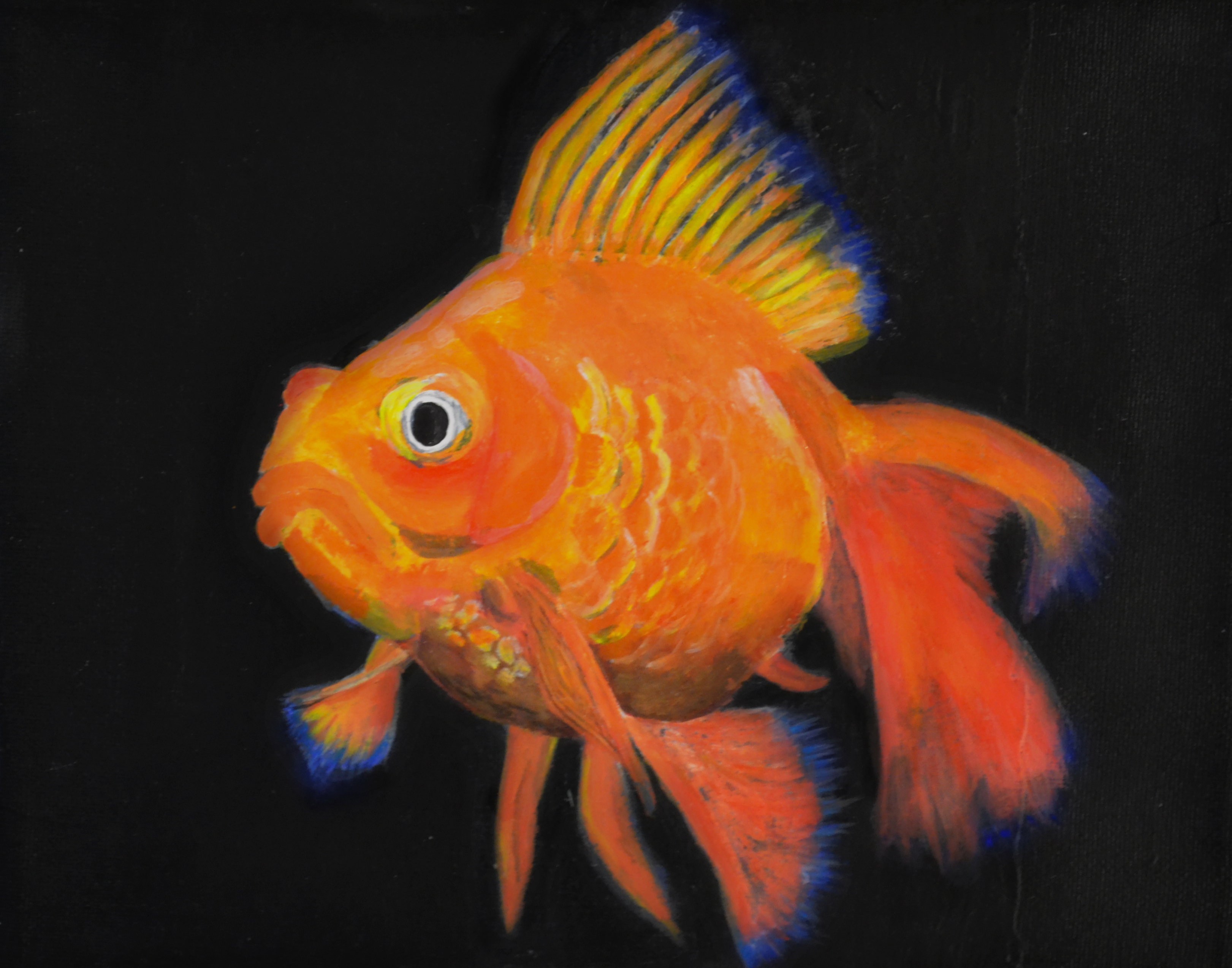 Goldfish Canvas