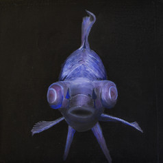 Black fish.jpg