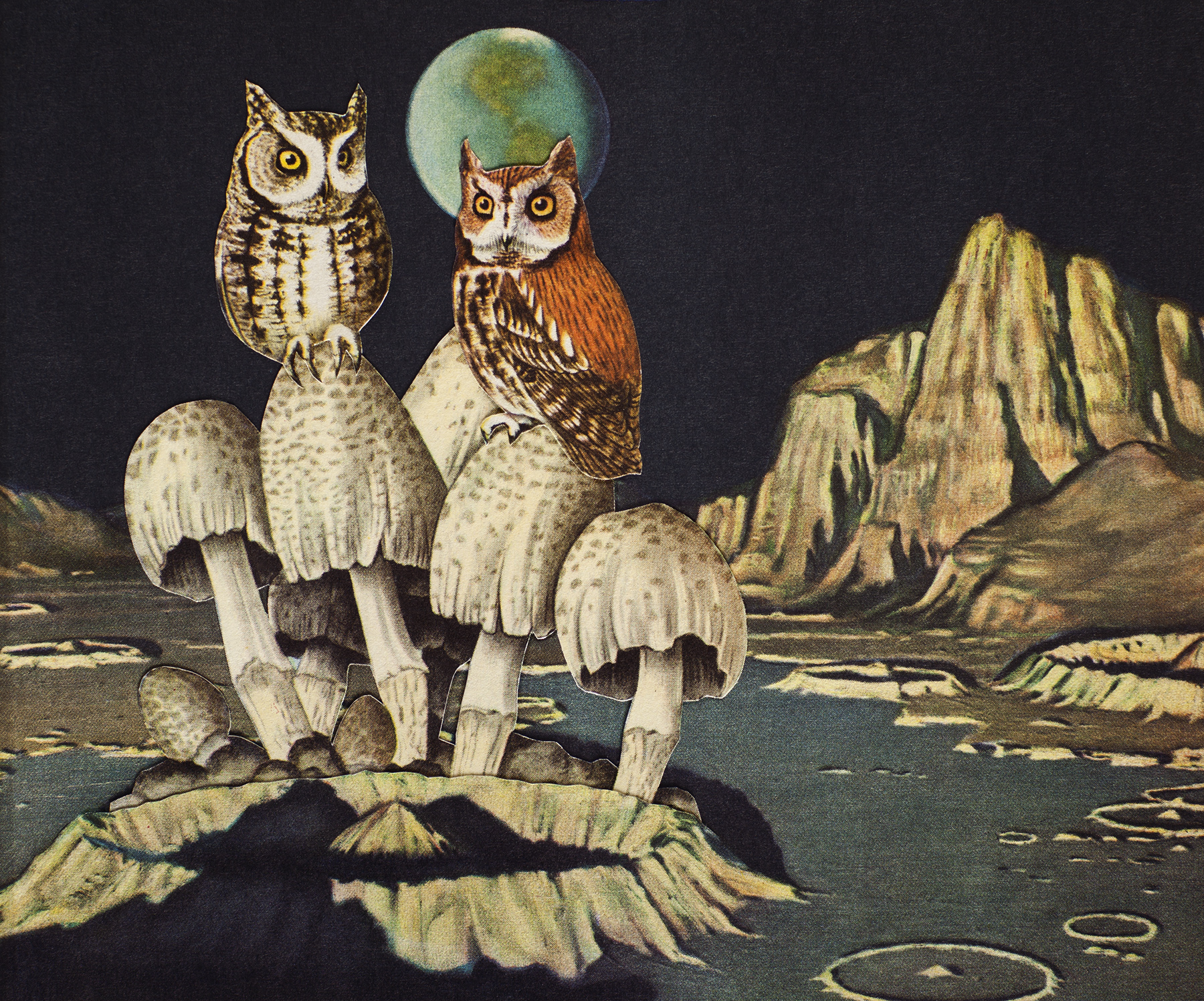 Animal Friends - Moon Owls