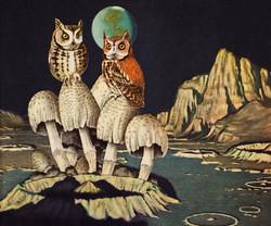 Animal Friends - Moon Owls