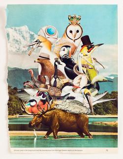 Animal Friends - Bird Pile