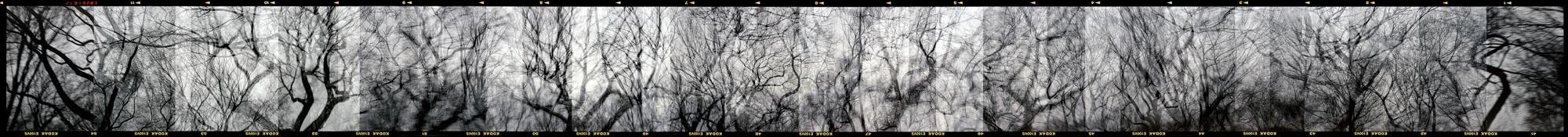 Central Park 1999