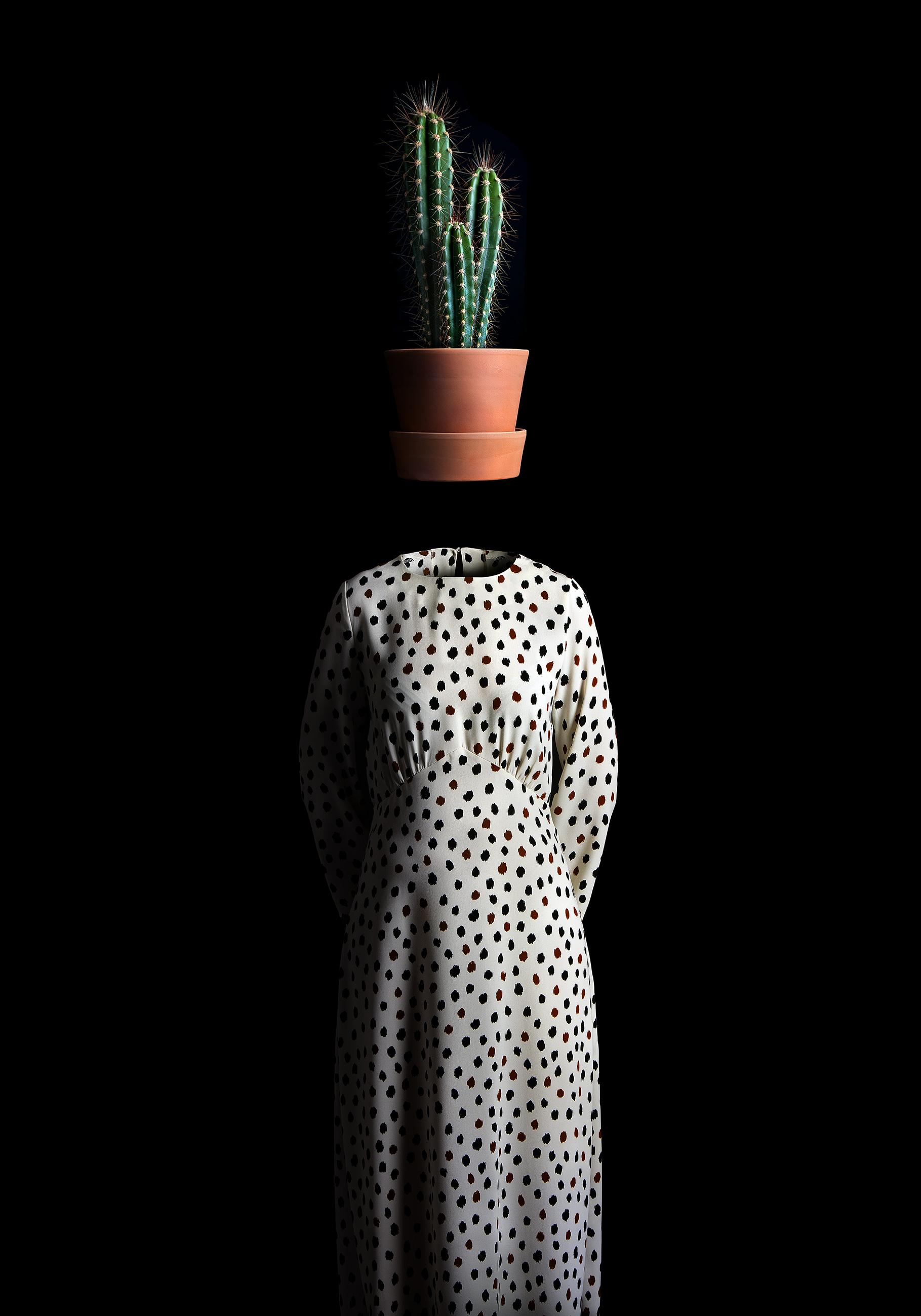 Ceci n'estdes les épines d'un cactus
