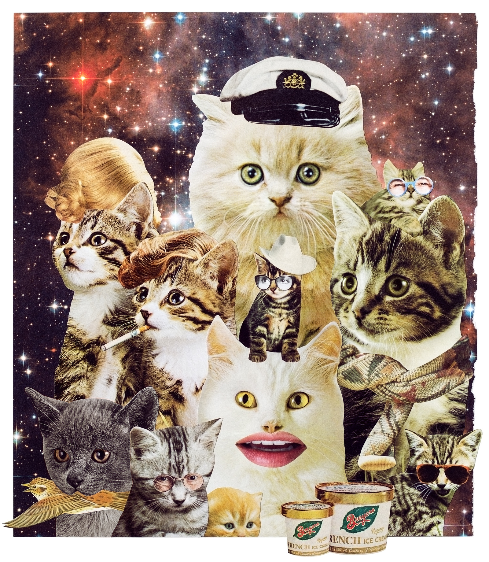 Animal Friends - Space catz