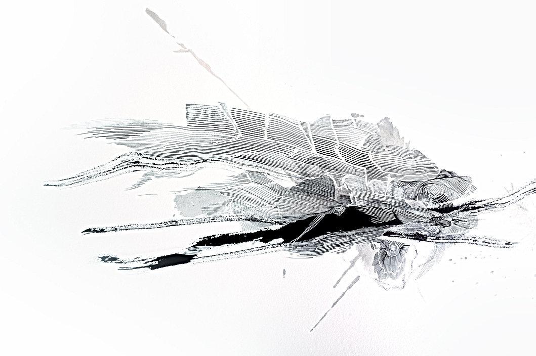 2020-Sparidae(700x500)_edited.jpg