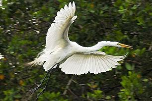 cuixmala birds.jpg