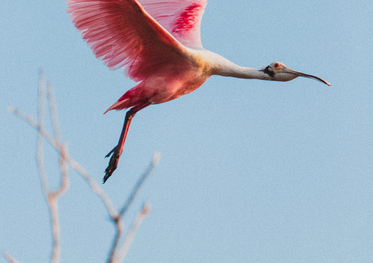 Cuixmala Bird.jpg