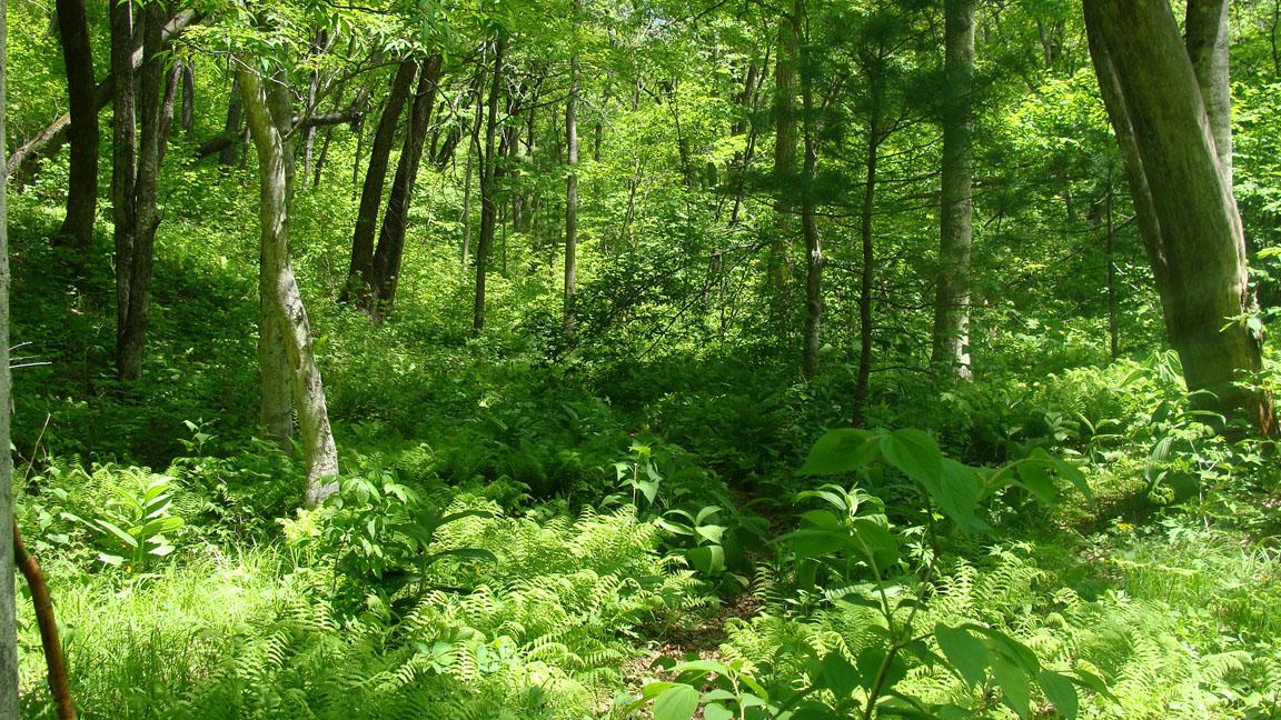 в красивый сказочный лес
