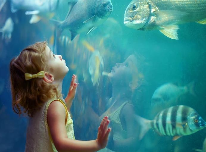 Подводная сказка