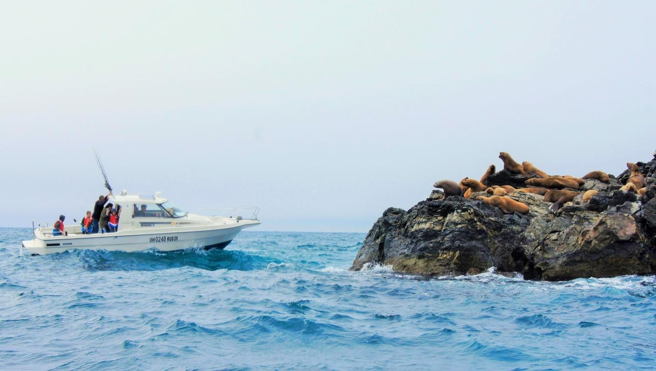 Северные морские львы
