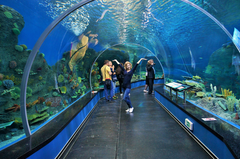 Подводный тоннель океанариума