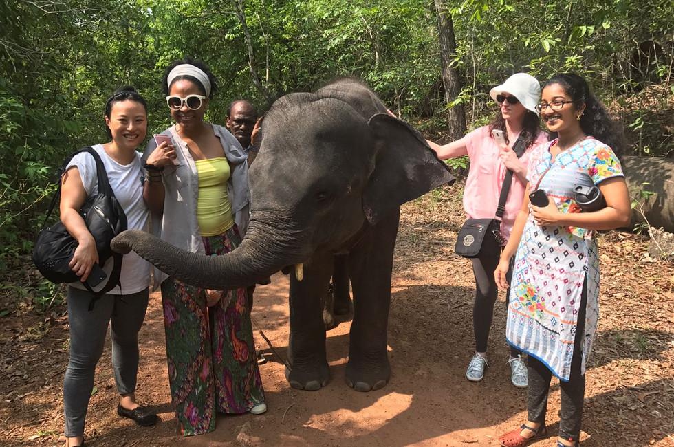 Super Friendly Baby Elephant