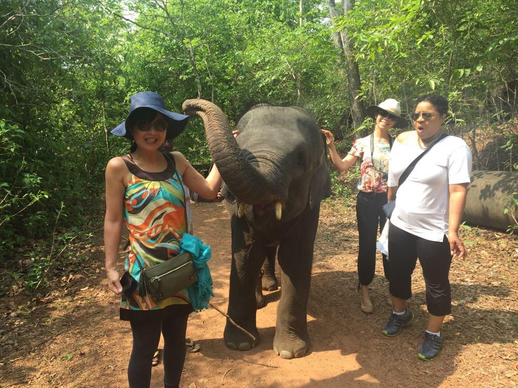 An elephant with a good fashion sense