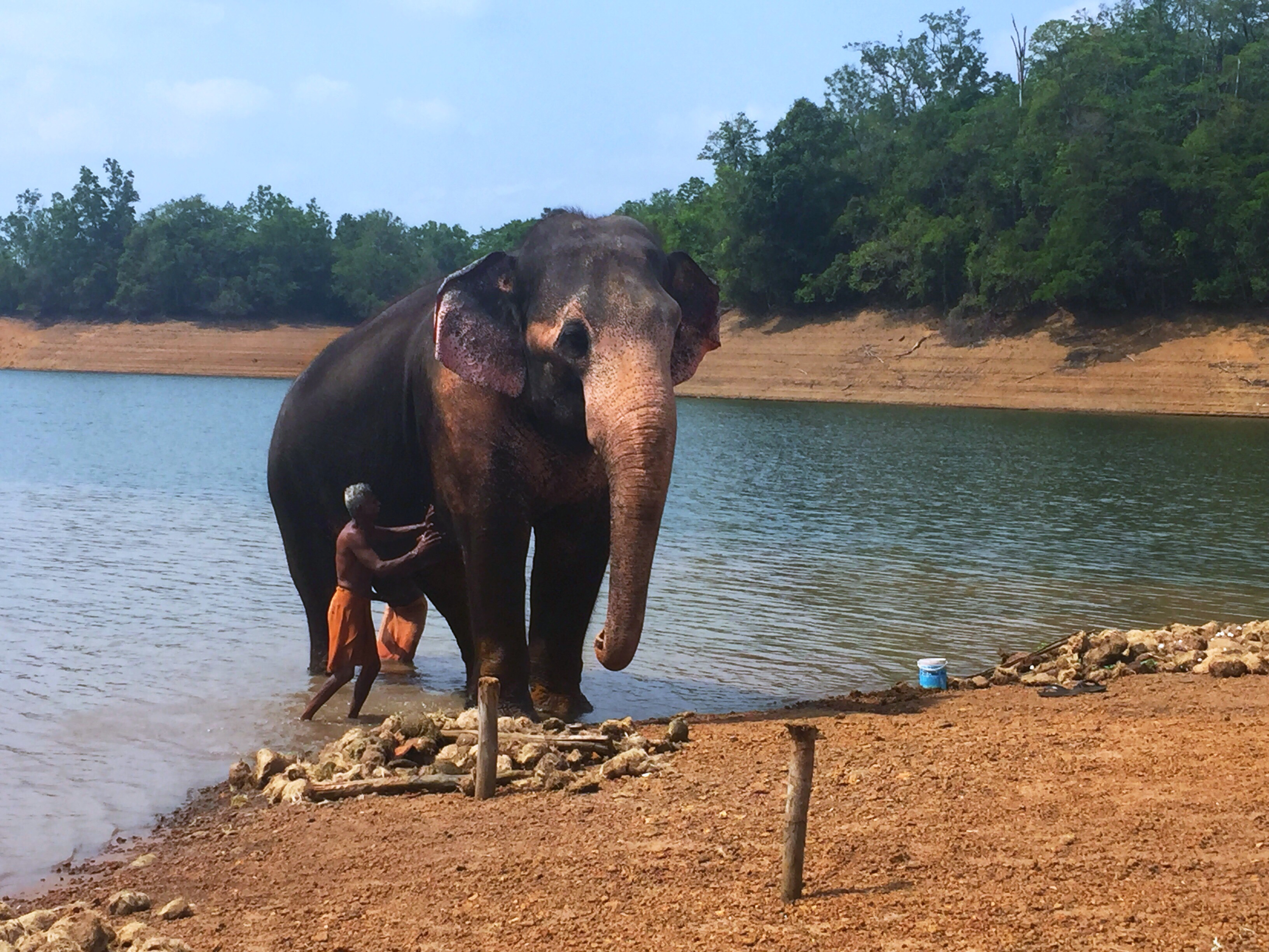 Kottoor Elephant Rehabilitation Centre