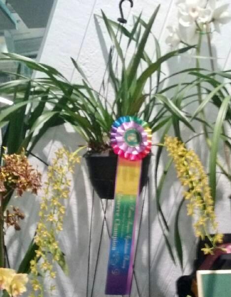 Reserve Champion-Cym Kuranda