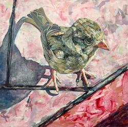 Sparrow.jpeg