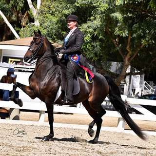 Brooke and Old School Grove @ Labor Day Jubilee Horse Show 2020