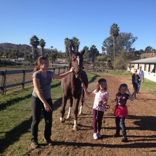 First Lesson - Learning How to Safely Lead a Horse