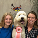 Keara, Hazel and Shannon Dog Contest @ Grand National & World Championship Horse Show 2020