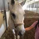 Princess (Pony)