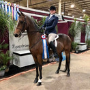 Katie and Graycliff GO Navy CH @ Grand Nationals 2020