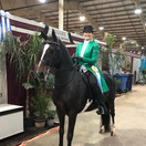Tamara and Morengo Pleasure Division @ Grand National & World Championship Horse Show 2020