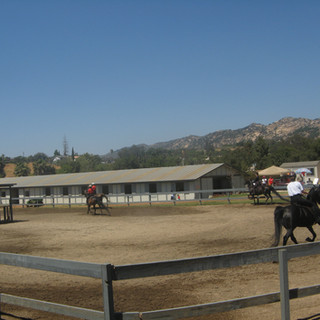 Private and Group Horseback Riding Lessons