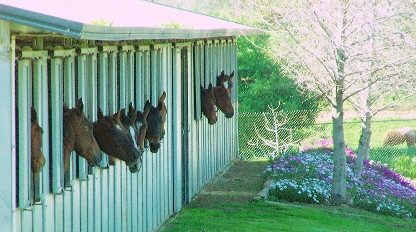 Horses Enjoying their View