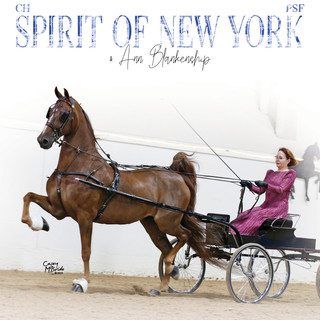 Anne and Spirt of New York