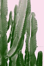 pexels-alizee-marchand-937799.jpg