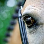 Chinos eye