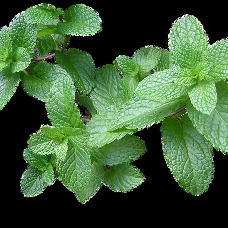 גלי חום של גיל המעבר? יש צמחי מרפא ממש קרובים שיכולים ממש להקל עלייך