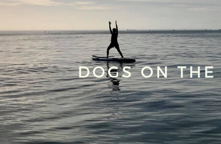 DOGS ON THE WATER - 5 reasons why you must try SUP YOGA
