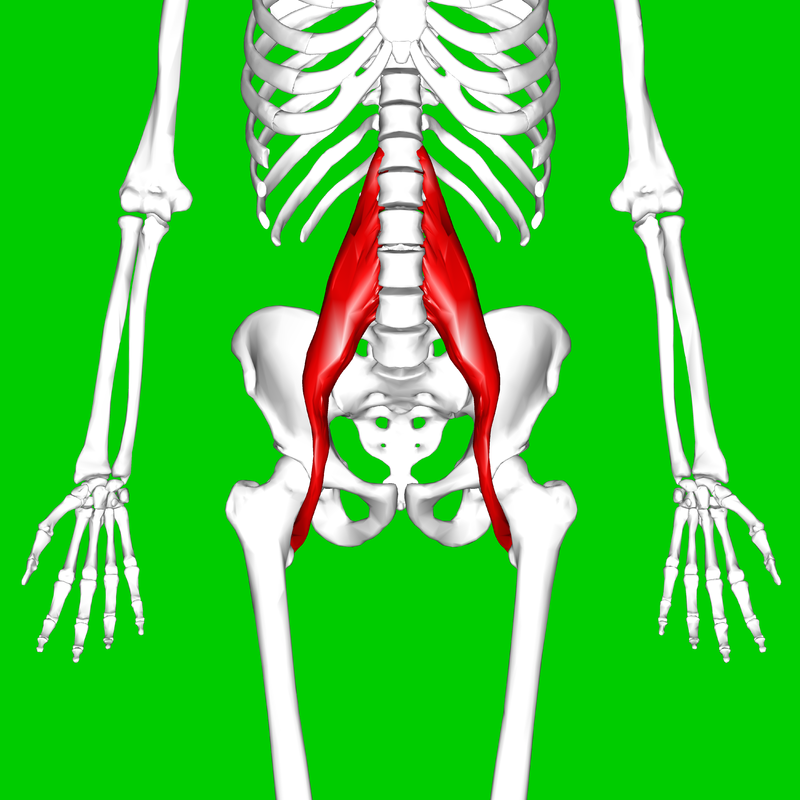 Tight Psoas Muscle cause pain