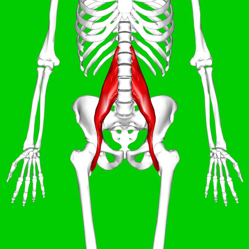 https://en.wikipedia.org/wiki/Psoas_major_muscle